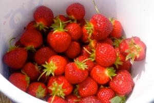 Whittamore's Strawberries